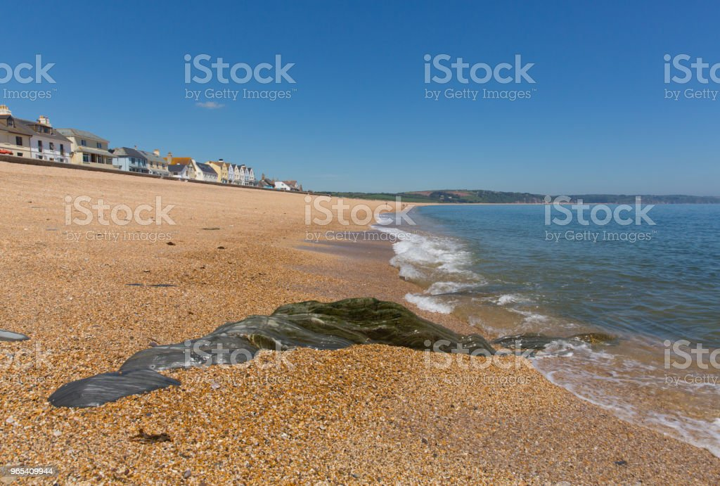 Slapton Sands beach Devon England Großbritannien, von Torcross in Richtung von Dartmouth - Lizenzfrei Baum Stock-Foto