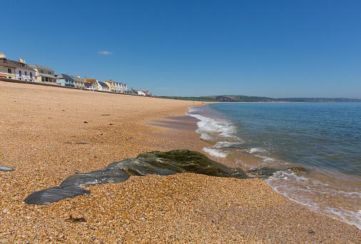 Slapton Sands Beach Devon England Großbritannien Von Torcross In Richtung Von Dartmouth Stockfoto und mehr Bilder von Baum