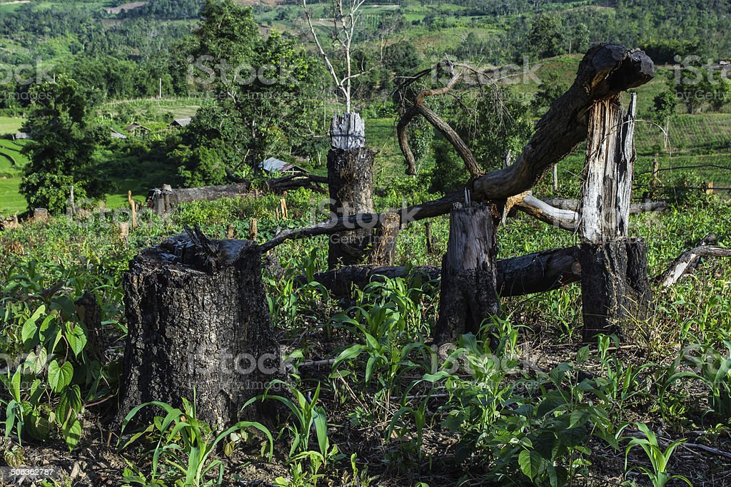 Slash and burn cultivation in north Thailand, stock photo
