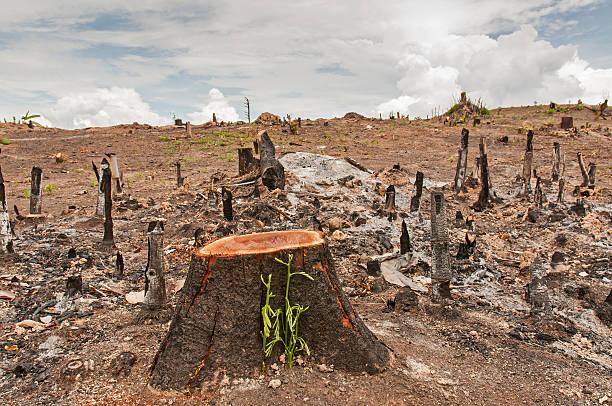 deforestación cultivo - deforestacion fotografías e imágenes de stock