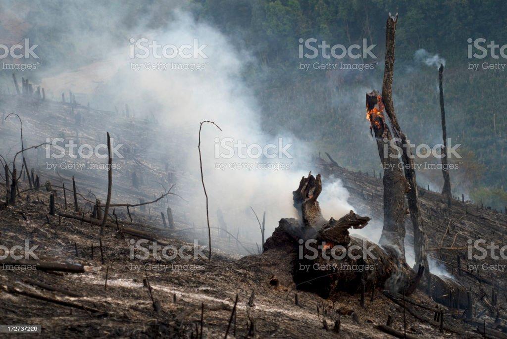 Deforestación - foto de stock