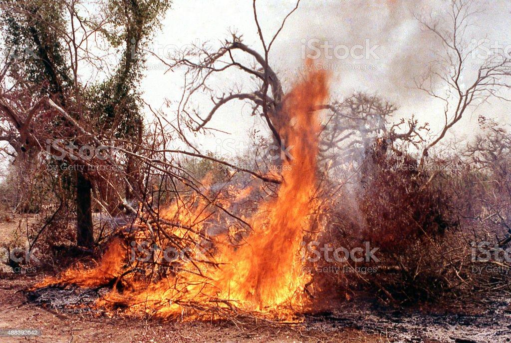 Slash and burn subsistence agriculture Yatenga Burkina Faso West Africa stock photo