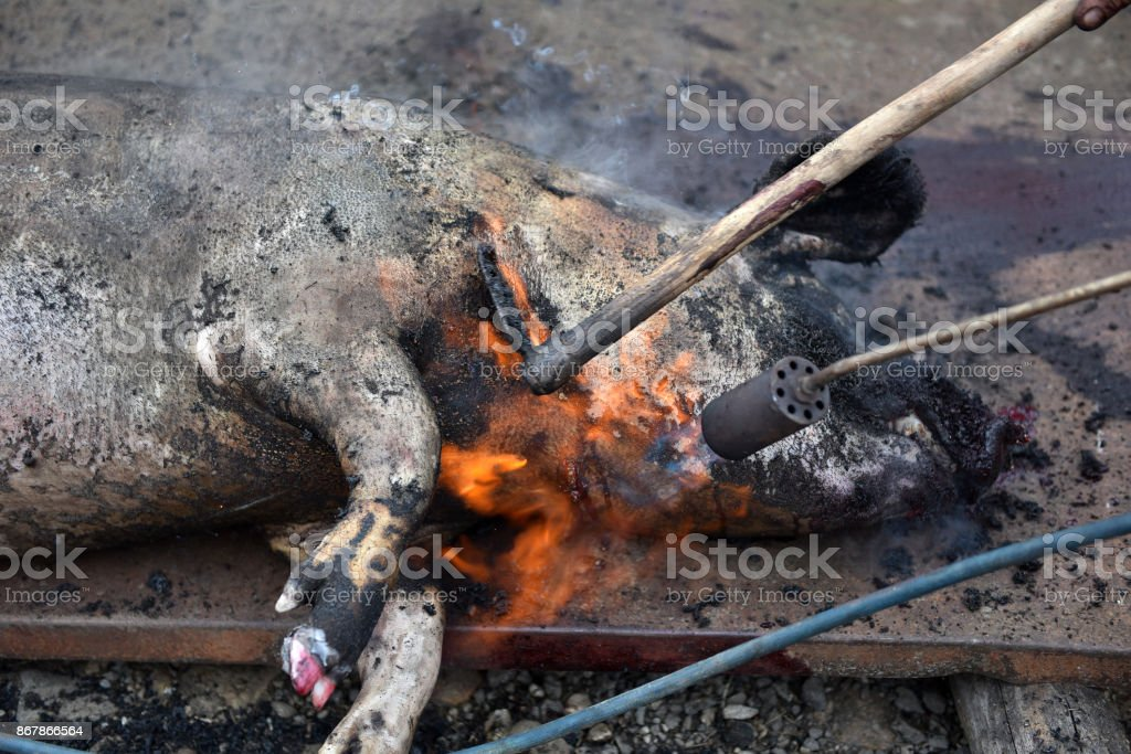 Slaughter burn the pig hair off with a gas burner stock photo