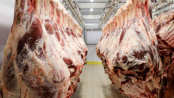 Slaughterhouse stock photo