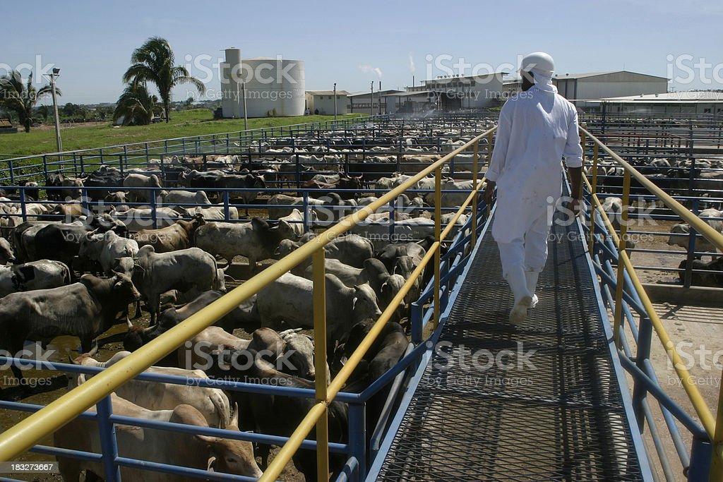 Slaughterhouse plant stock photo