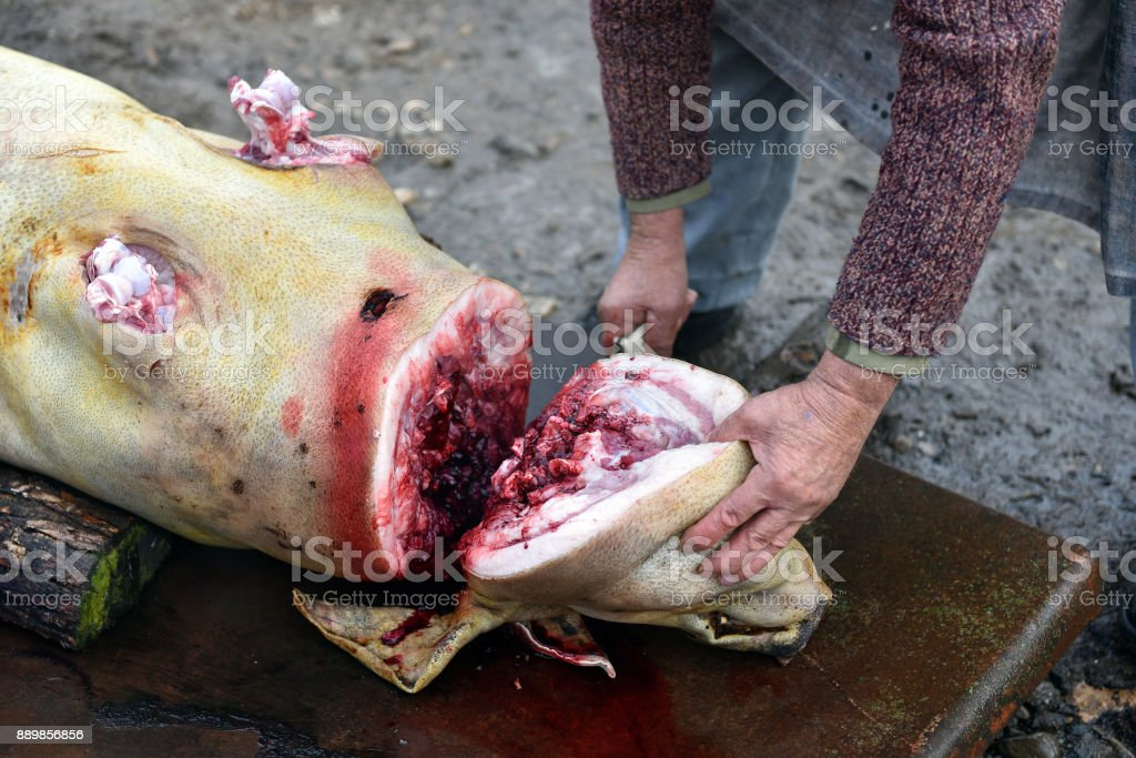 Slaughterman is cutting off the head of the pig stock photo