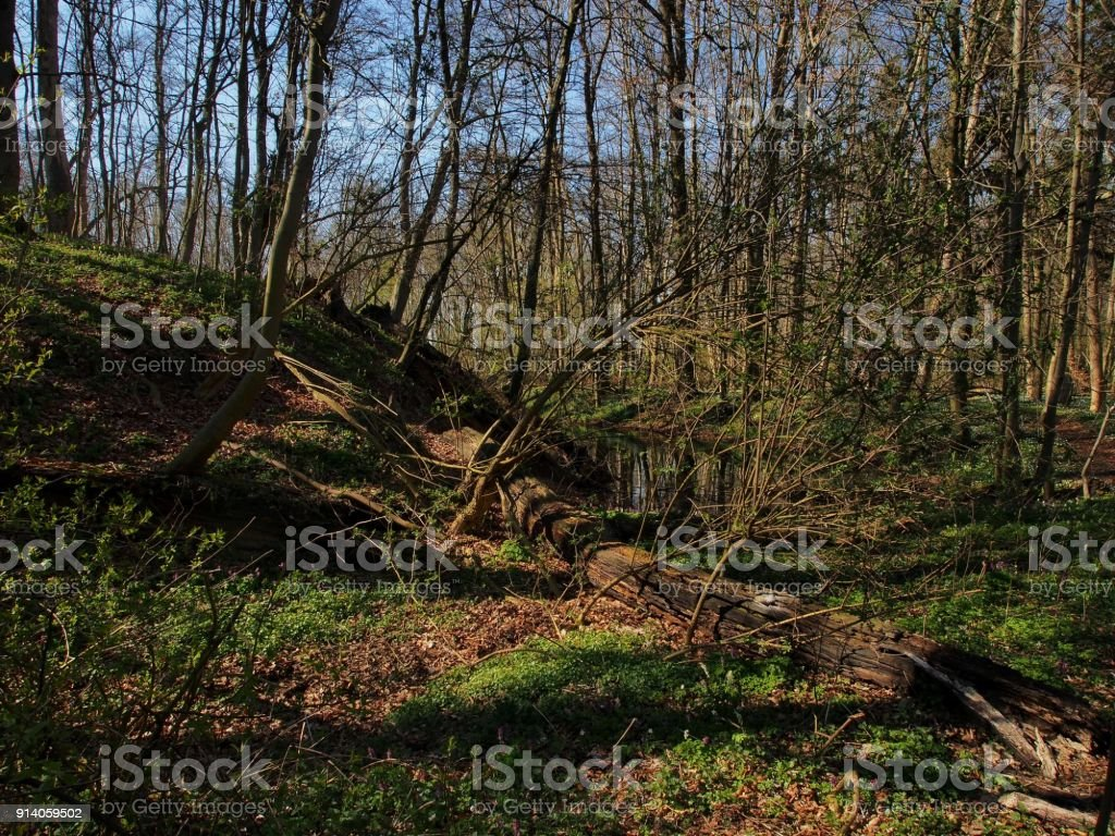 Slawischer Burgwall vom Waldüberwachsen stock photo