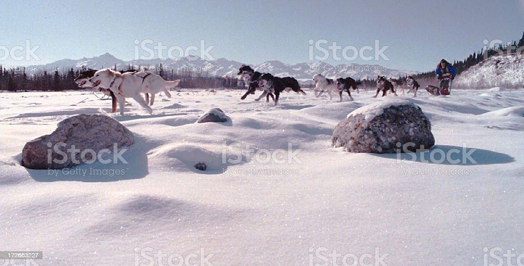 Sled dog race stock photo
