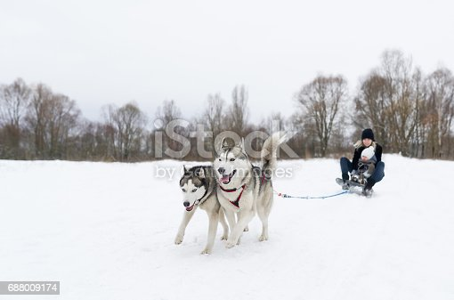 istock Sledding with two dog huskies 688009174