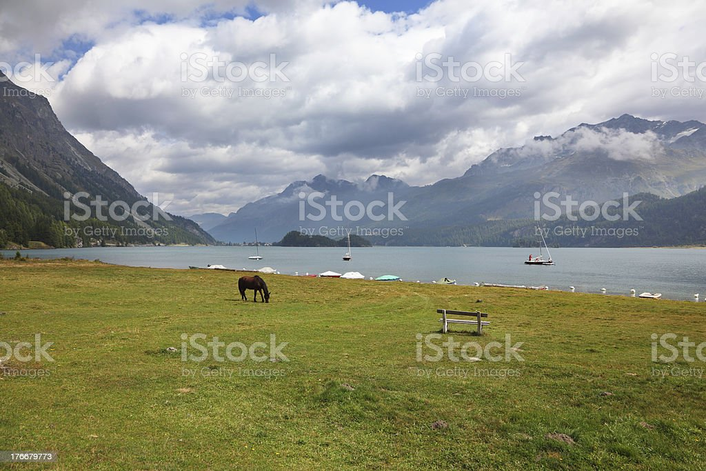 Sleek thoroughbred horse on coast royalty-free stock photo