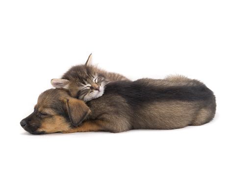 sleep kitten and puppy  isolated on a white background