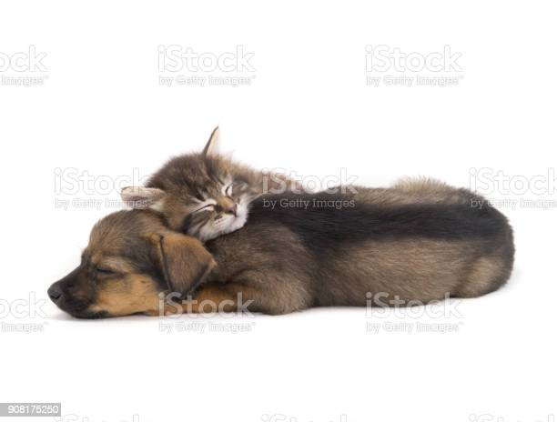 Sleep kitten and puppy picture id908175250?b=1&k=6&m=908175250&s=612x612&h=g71kvg enmotybe0imkh3rjkfkweh5hkevib8yrb0ng=
