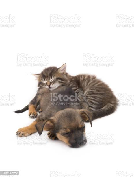 Sleep kitten and puppy picture id908175258?b=1&k=6&m=908175258&s=612x612&h=syjsrena0hsmkkyps3mmsr7hy adbw8 8q9x1b6wn6w=