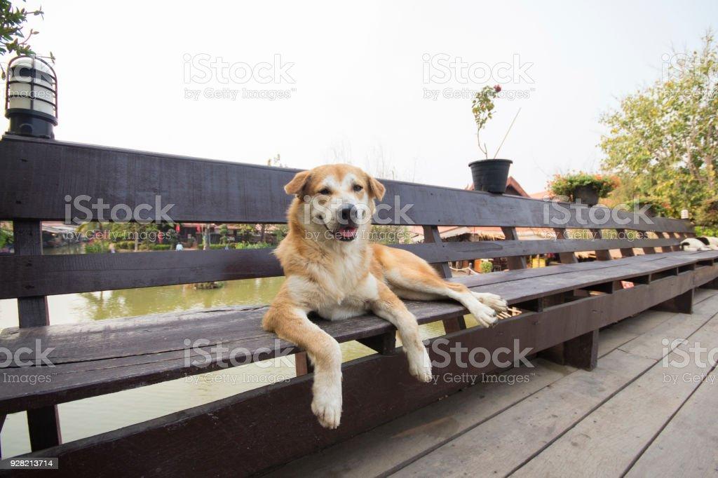 Sleep on the floating bridge Ayodhya. stock photo