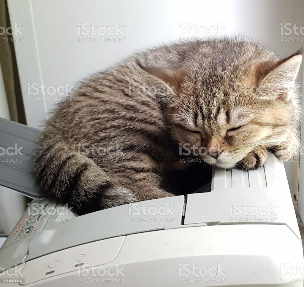 Sleeping at work стоковое фото