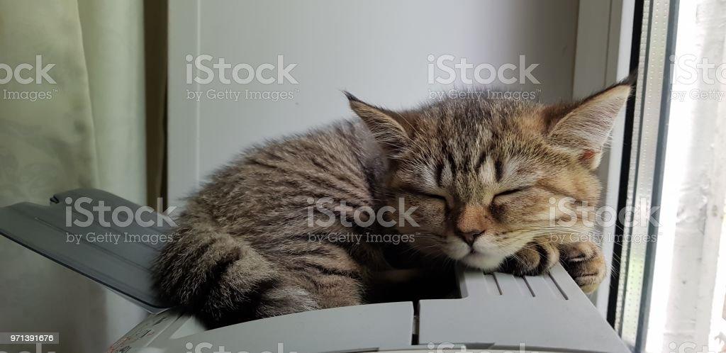 Sleeping at work stock photo