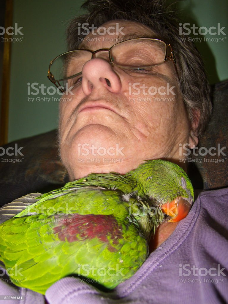 sleeping baby alexandrine parrot and mature woman royalty-free stock photo