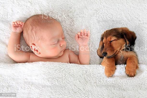 Sleeping baby and puppy picture id470707386?b=1&k=6&m=470707386&s=612x612&h=tdhseqhqzt5sddd3v8sl9z2gvqv0wmkqz4bpcvyp5l4=