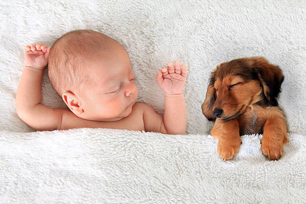 Sleeping baby and puppy Newborn baby and a dachshund puppy sleeping together. newborn animal stock pictures, royalty-free photos & images
