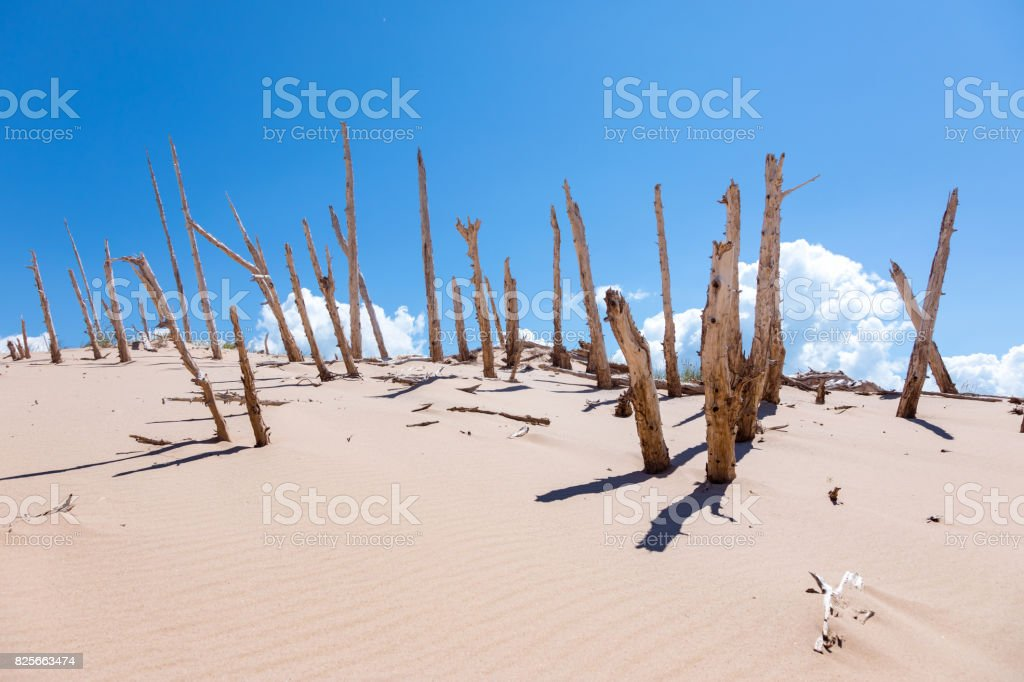 Sleeping Bear Dunes Ghost Fores, Empire Michigan stock photo