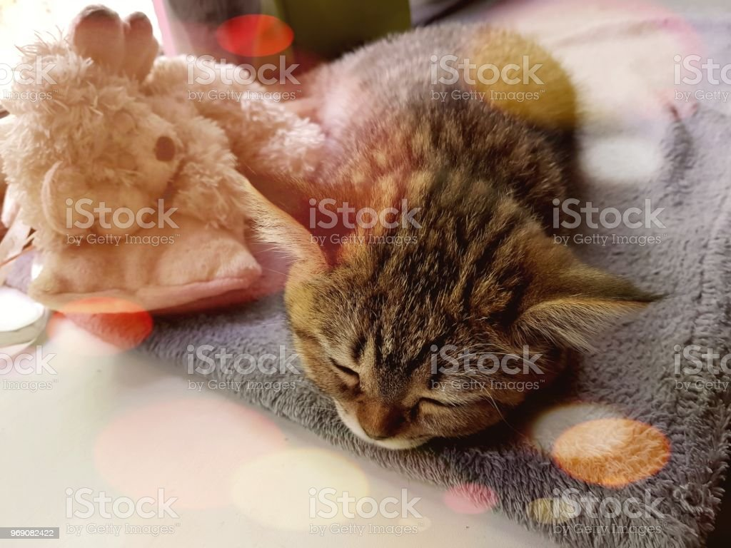 Sleeping beautiful cat стоковое фото