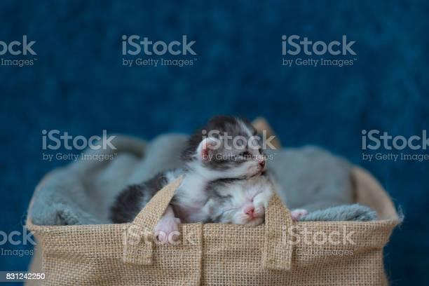 Sleeping beauty kitten picture id831242250?b=1&k=6&m=831242250&s=612x612&h=zmgelhzjcupnvxk5fxm3gtyzyvtswkmgi0qvhbp3gck=