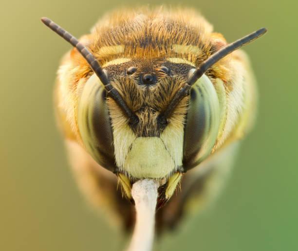schlafende bienen auf gras aus nächster nähe. großes vergrößerungsbild durch schlafendes bienenporträt in der natur - demographie deutschland stock-fotos und bilder