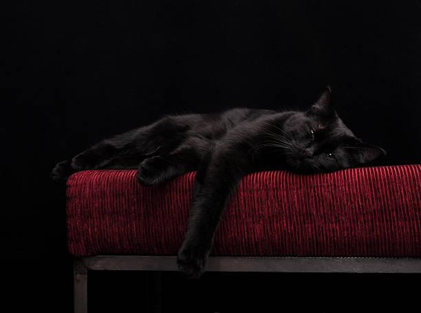 Sleeping black cat picture id135757133?b=1&k=6&m=135757133&s=612x612&w=0&h=zuupwqokfadww8q2i0crs7xzh1odz5xd1elu76zriai=