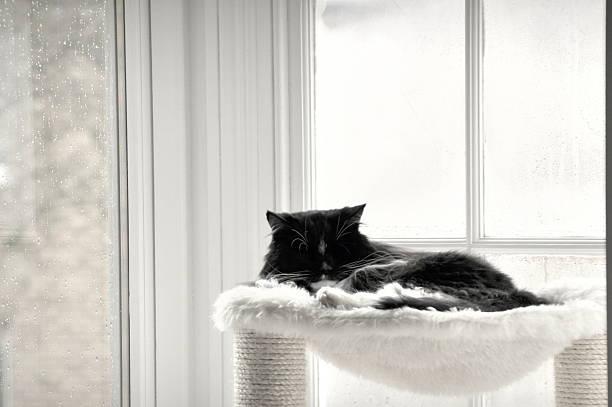 Sleeping Black Cat stock photo