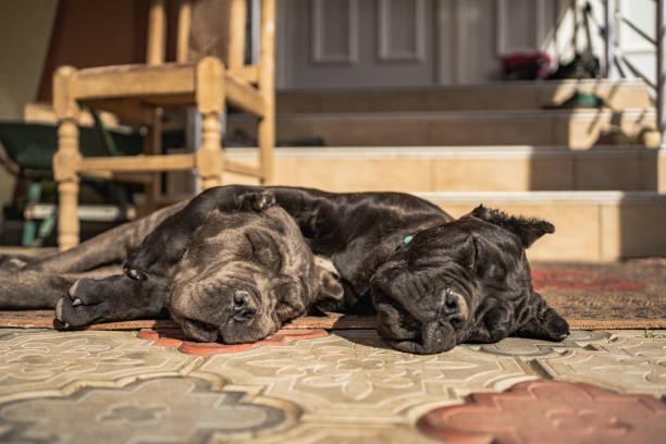 Sleeping buddies stock photo
