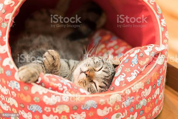 Sleeping cat in cat bed picture id532349318?b=1&k=6&m=532349318&s=612x612&h=eq7gkwvccnncu18ywei7zfwcthywxbezpvpvoqamtgk=