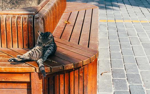 Terrific Sleeping Cat Leaning On Wooden Bench Stock Photo Download Inzonedesignstudio Interior Chair Design Inzonedesignstudiocom