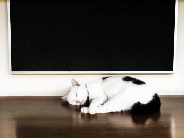 Sleeping cat on the table have board is background vintage color picture id1022887916?b=1&k=6&m=1022887916&s=612x612&w=0&h=kvvvyjyeav7ex0 lezmkc3ksywnvl h6 o66kal vg4=