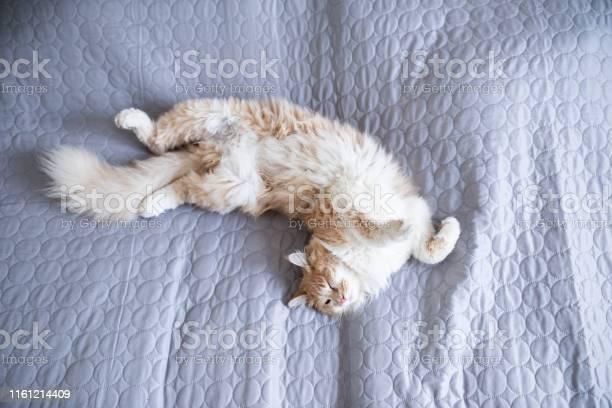 Sleeping cat picture id1161214409?b=1&k=6&m=1161214409&s=612x612&h=zbc8 nae1 kwqbkphvhr5w5xhwss qnyf8tivhddnta=