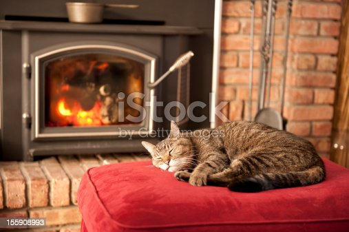 An old tabby cat soaks up the heat in front of a wood burning stove.
