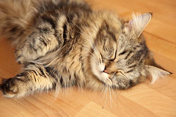Sleeping cat picture id178951836?b=1&k=6&m=178951836&s=612x612&w=0&h=7wku1a7sgr y9qzfmqimdghskhtf0uudi944vgyoqlw=