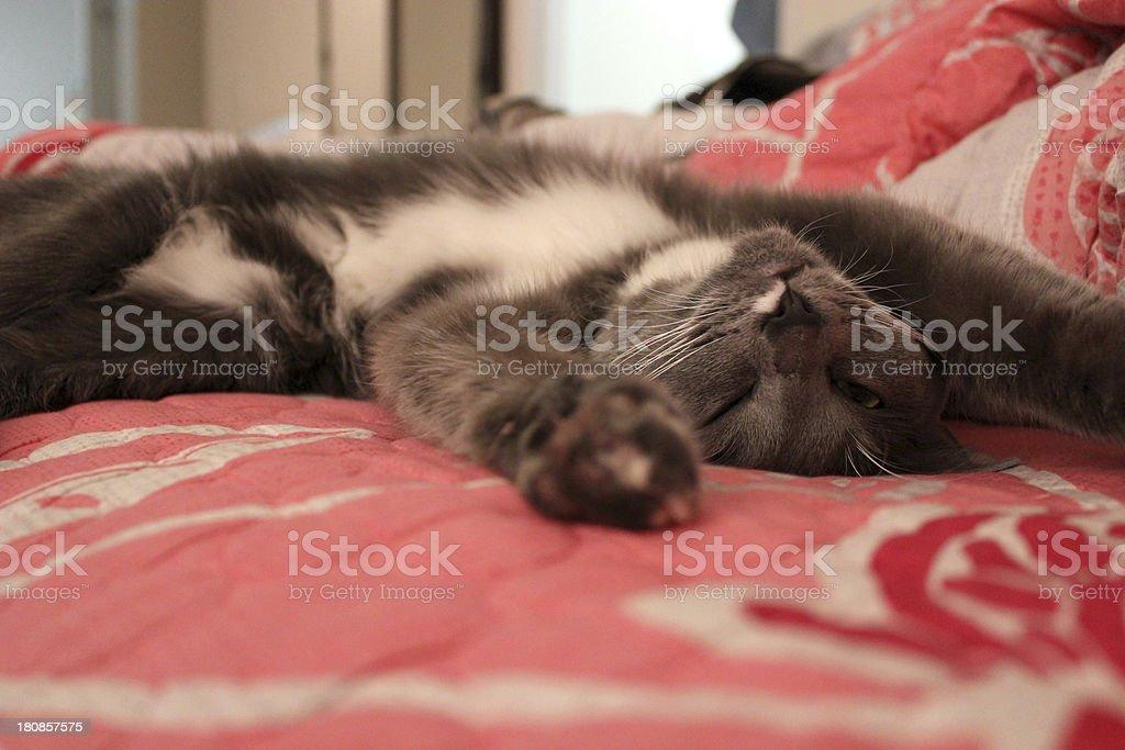 Sleeping cat - Royalty-free Animal Stock Photo