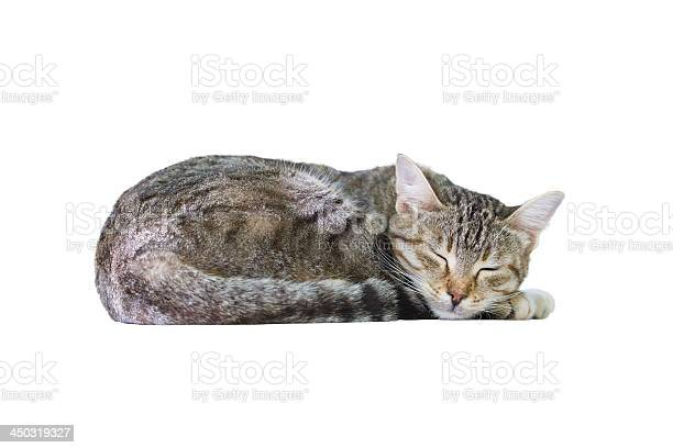 Sleeping cat picture id450319327?b=1&k=6&m=450319327&s=612x612&h=r2mxu1k4nggu50e7ehnwjs h xyg5emy5vunj1f9 ea=