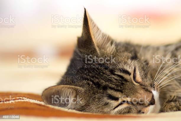 Sleeping cat picture id493113046?b=1&k=6&m=493113046&s=612x612&h=82pp83vfbhdsegrhaz vqaw9xaeodzwayrsmwq6hy4c=