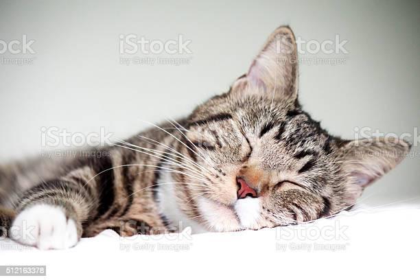 Sleeping cat picture id512163378?b=1&k=6&m=512163378&s=612x612&h=jkwgsuwp gtlg8uom3fvykk4zoz5fdq8 gqr gv4w o=