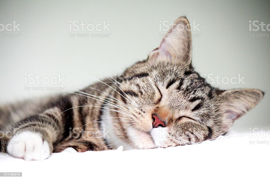Dormitorio cat. - foto de stock