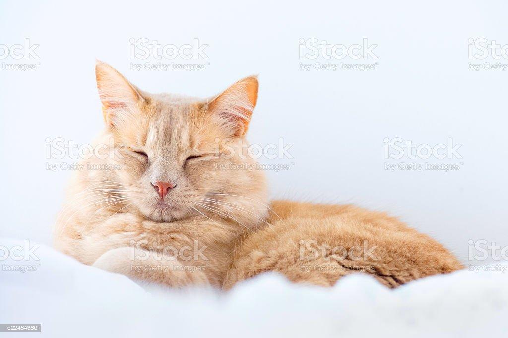 Gato dormindo - foto de acervo
