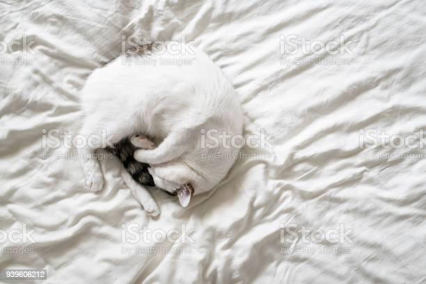 Sleeping cat picture id939606212?b=1&k=6&m=939606212&s=612x612&h=wliorug  cw2wgjgblar2 9ijbgp1kcupg5j yznweg=