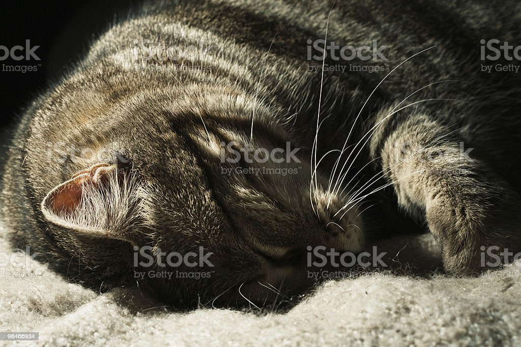 Sleeping cat royalty-free stock photo