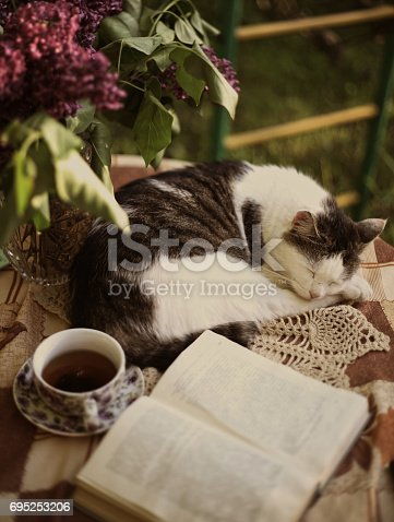 Sleeping Cat With Open Book Lilac In Vase And Tea Cup Stock Photo