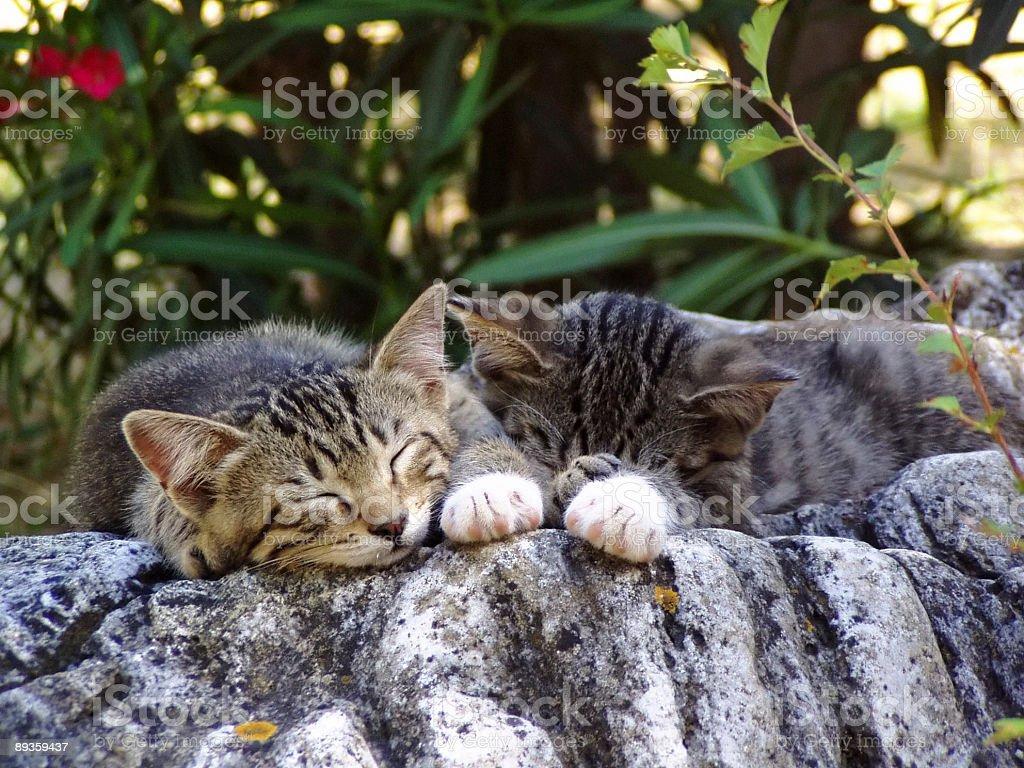 Sleeping Cats royalty-free stock photo