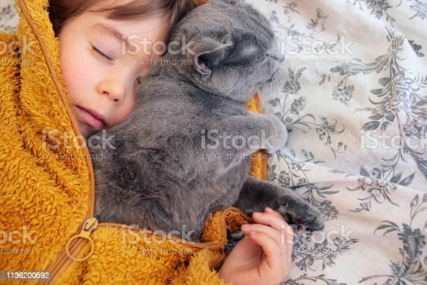 Sleeping child with his kitten picture id1136200592?b=1&k=6&m=1136200592&s=612x612&h=54mj 3yctqxcef7zdzlslej7l7cxsouxspb4lijqvo8=