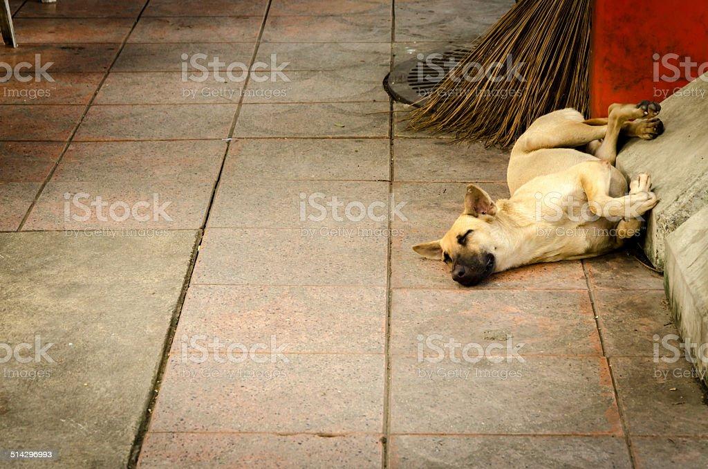 Sleeping dog in big city Bangkok stock photo