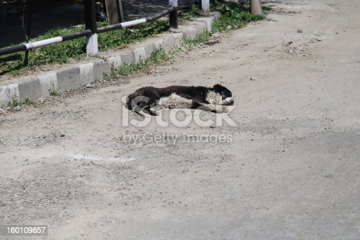 istock Sleeping dog on the street 160109657