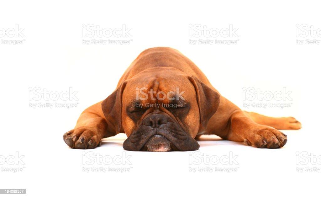 Pies Spać – zdjęcie